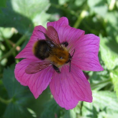 bee, unknown insect
