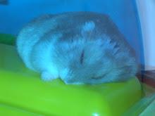 ...il criceto di patty (che STRANAMENTE dorme)...