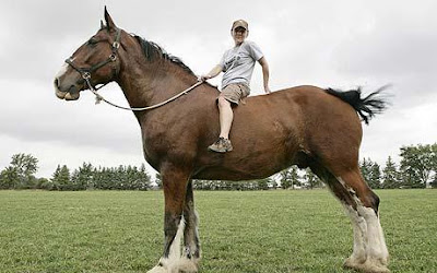 world's tallest horse picture, world's tallest horse photo, world's tallest horse images, world's tallest horse video, Poe the Clydesdale picture, Poe the Clydesdale photo, Poe the Clydesdale images, Poe the Clydesdale video, tallest horse in the world, biggest horse in the world, biggest horse picture, biggest horse photo, biggest horse images
