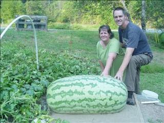 World's biggest watermelon photo, World's largest watermelon picture, Janet and Chris Kent biggest watermelon grown in Sevier County, Largest watermelon in the World 2010, 2011 World's biggest watermelon