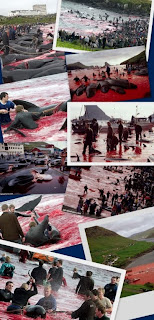 Faroe Islands pilot whale masacre collage