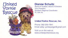 United Yorkie Rescue