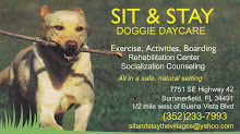 Welcome to Sit & Stay