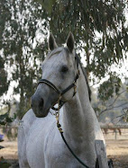ESB Stallions