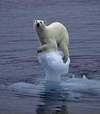 Arne Naevra - Polar Meltdown (2007) photo © Arne Naevra