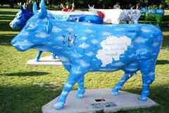 Cow Painted As Sky