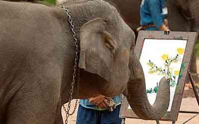 Elephant Art, Thailand