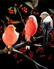 Pájaros de Ann Craven