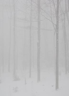 hazy snow scene vertical