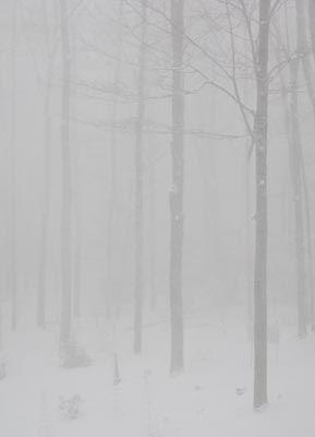 hazy snow scene vertical