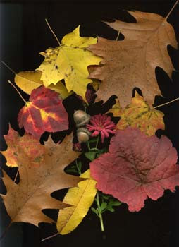 leaves and acorns