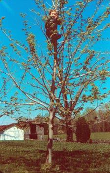 tree climbing WS