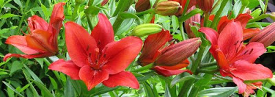 MCU lilies