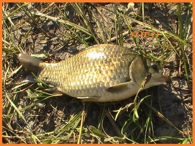 хорошая рыбалка в новочеркасске