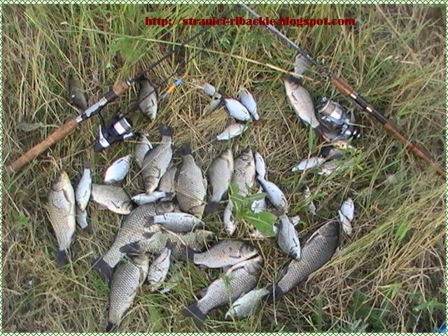 прогнозы на рыбалку в ростовской области