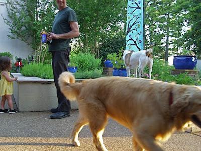 staff dogs