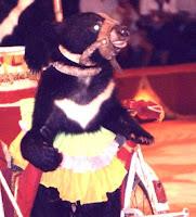 La legge italiana in difesa degli animali da circo