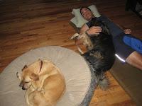 Joe and the Dogs