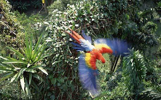flighted+parrot How Earth Hour Can Help Parrots