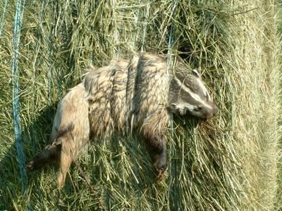 [badger2.aspx]
