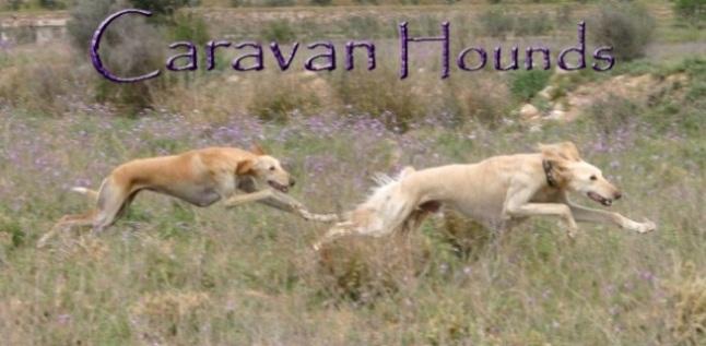 Caravan Hounds