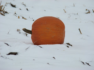 Pumpkin in Snow