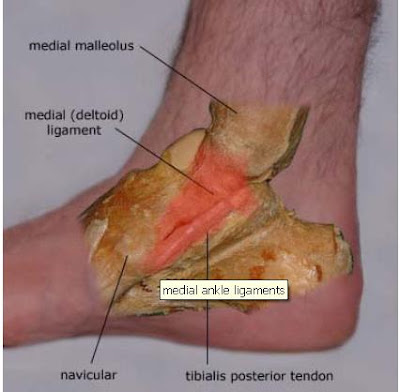 Inversion Of Foot Muscles