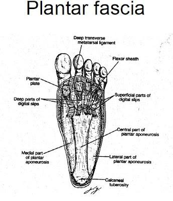 Plantar Surface Of Foot