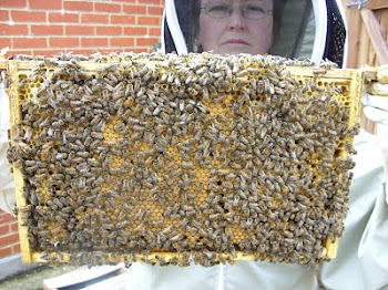 The Bee Keeper at Work