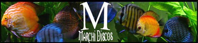 Marchi Discos