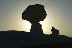 Dans un désert blanc, en Égypte,roches représentant une poule et un arbre!