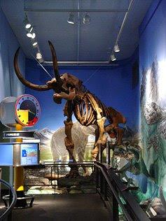 Burke Museum - Mastadon