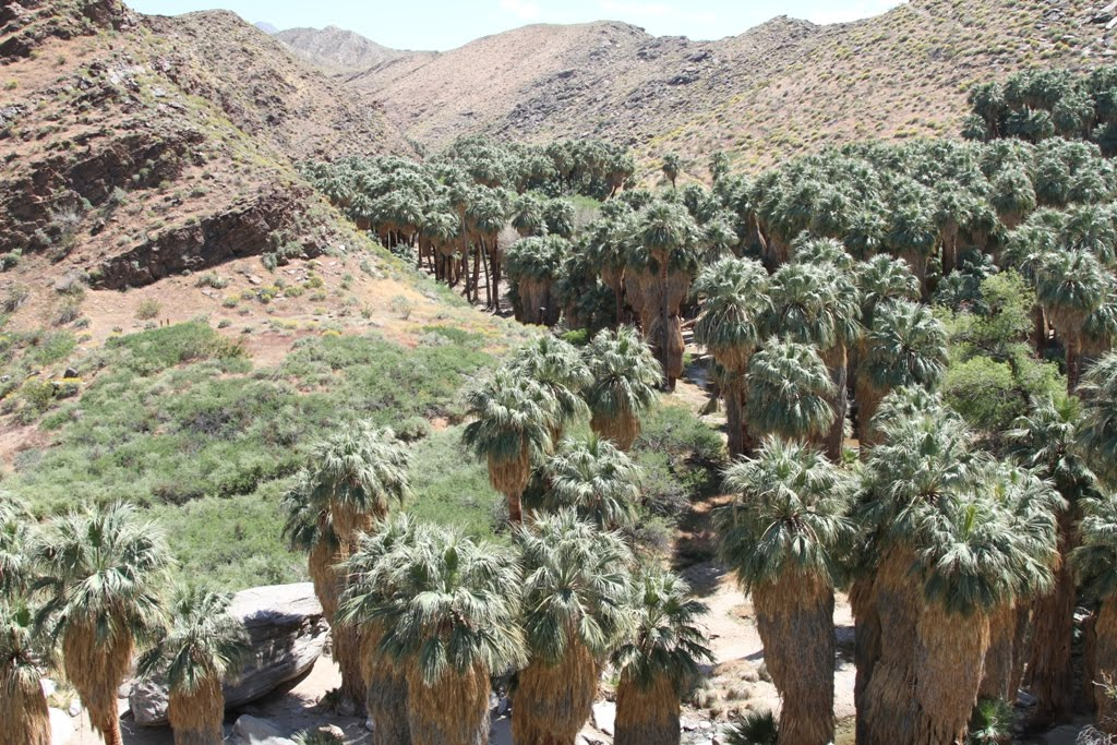 Merveilleux Palm Canyon   Indian Canyons