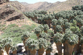 Palm Canyon - Indian Canyons