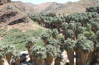 Palm Canyon - Indian Canyons