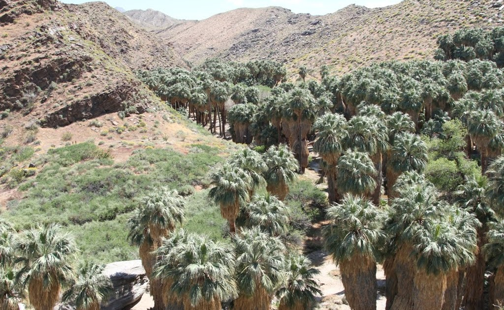 Travelmarx Indian Canyons Moorten Botanical Garden And Palm Springs Aerial Tramway
