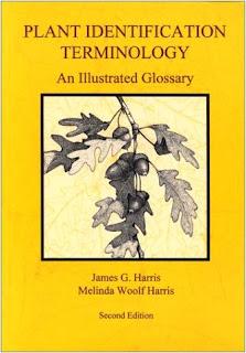Plant Identification Terminology