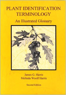 Plant Identification Terminology - An Illustrated Glossary