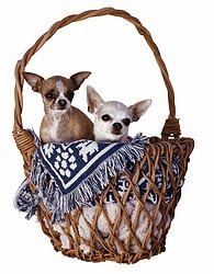 Two dogs sitting in the basket
