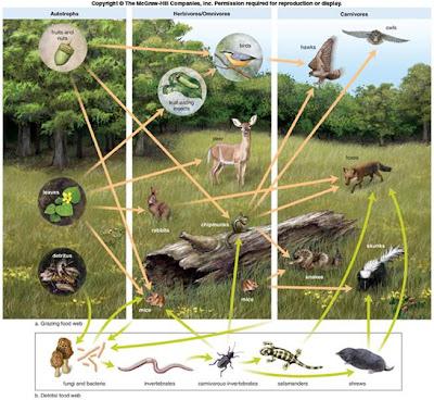 Food webs grassland Asian