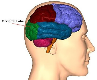 Science, Natural Phenomena & Medicine: Occipital Lobe