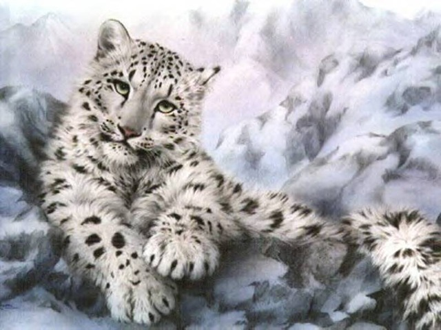 snow leopard wallpaper mac. Snow Leopard