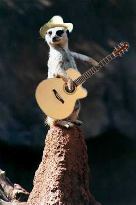 meerkat___.jpg