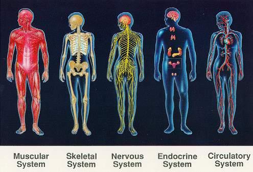 http://3.bp.blogspot.com/_kdLe_Bd18m4/TUqywVGrxOI/AAAAAAAAAgM/DeHbC8RHMvY/s1600/humanbody.jpg
