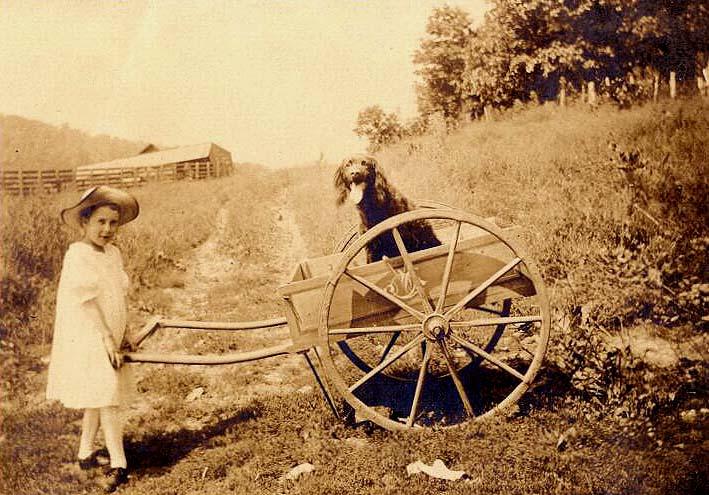 [dogcart2:jpg.]