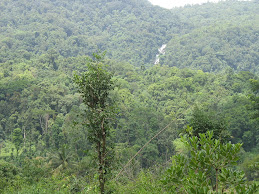 Dense vegetation of Agumbe