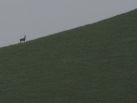 Deer spotted in the peak - 2009