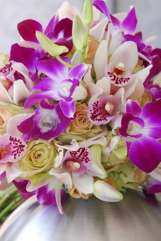 Cymbidium Orchids Hawaii of The Cymbidium Orchids