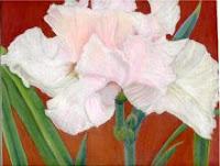 r-atencio-pink-iris