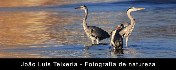 João Luis Teixeira - Fotografia de natureza